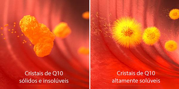 Absorção do Q10 no organismo